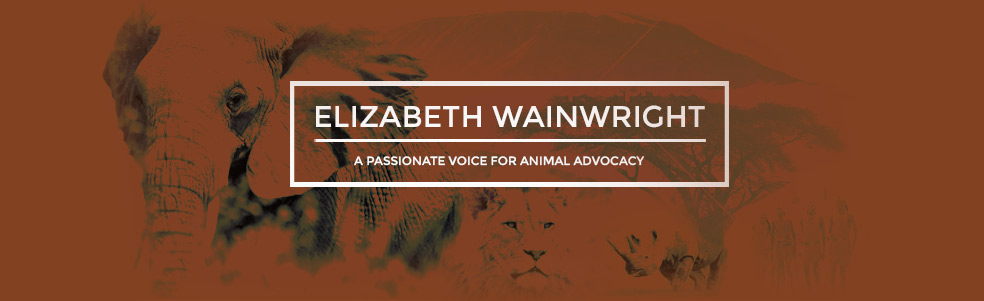Elizabeth Wainwright at Kinga Animal Advocacy